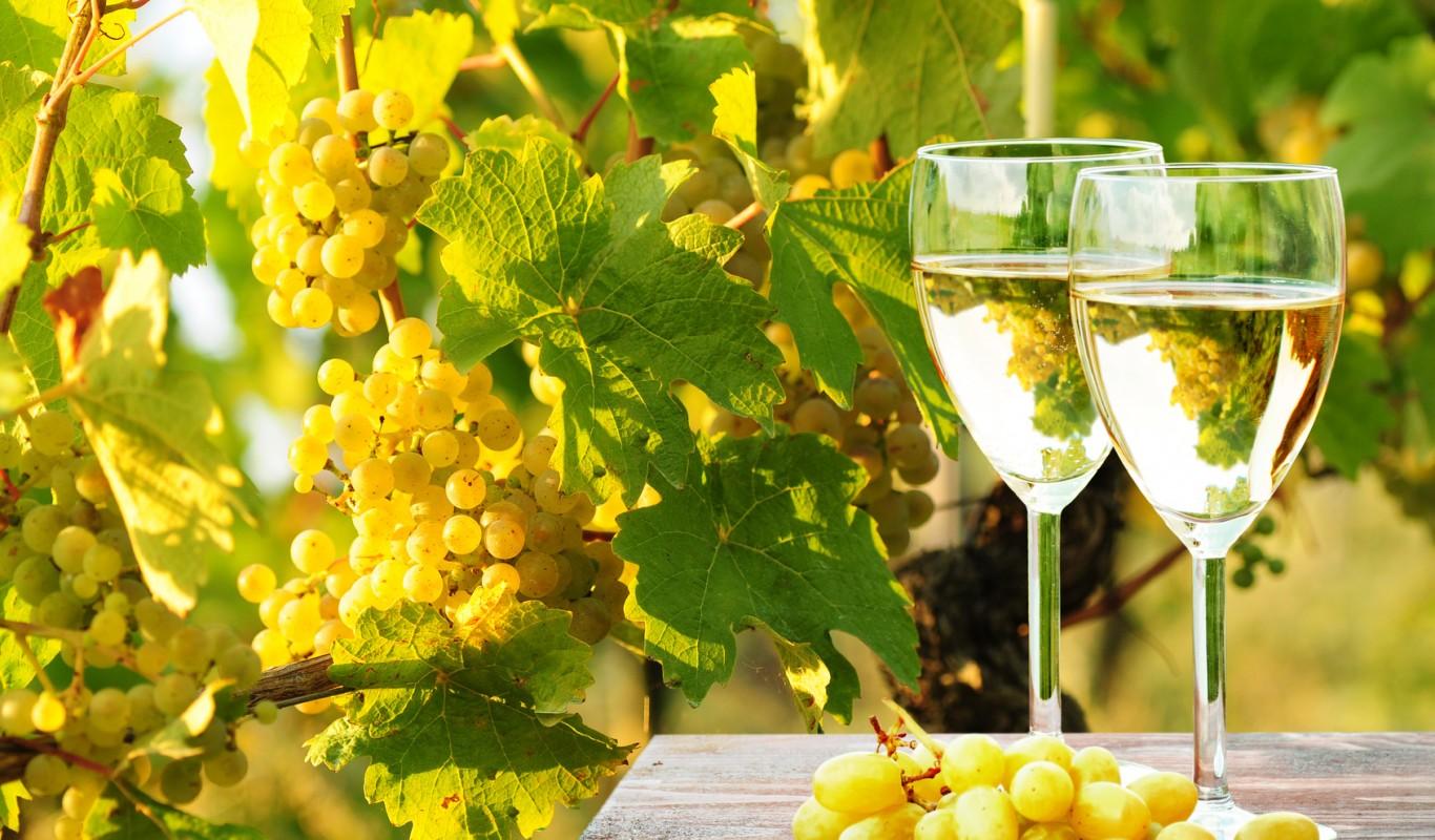 vinho-vermentino