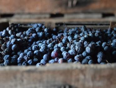 amarone-red-wine