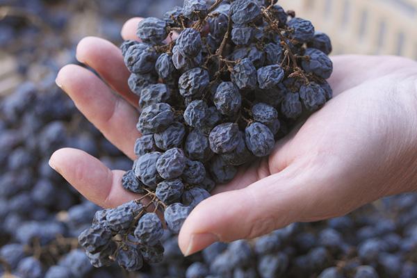 amarone-wine