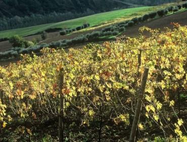 vino_pecorino_1