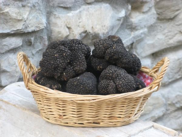 tartufo-nero fragno 3