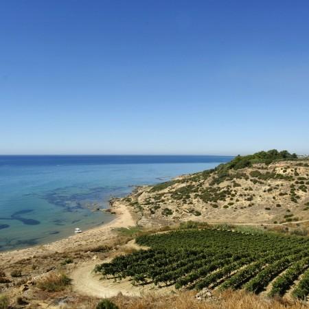 vini-siciliani-1