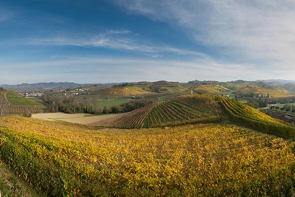 vigne-langhe-barolo-autunno