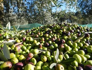 planeta-olive